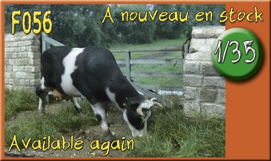 F056 Vache normande Marguerite